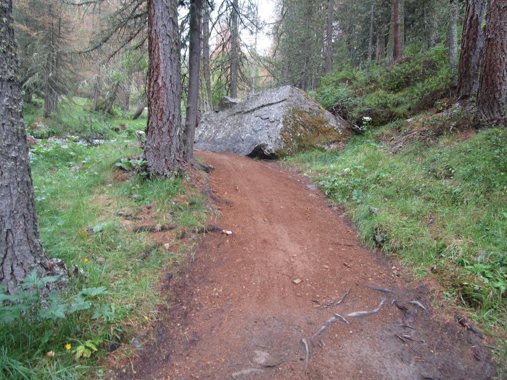 Val_delle_Mine_trail_už_po_úprave,_korene_prisypané_šotolinou